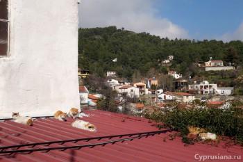 Кошки на крыше