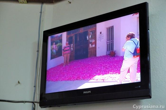 Розовый фестиваль на картинке ТВ