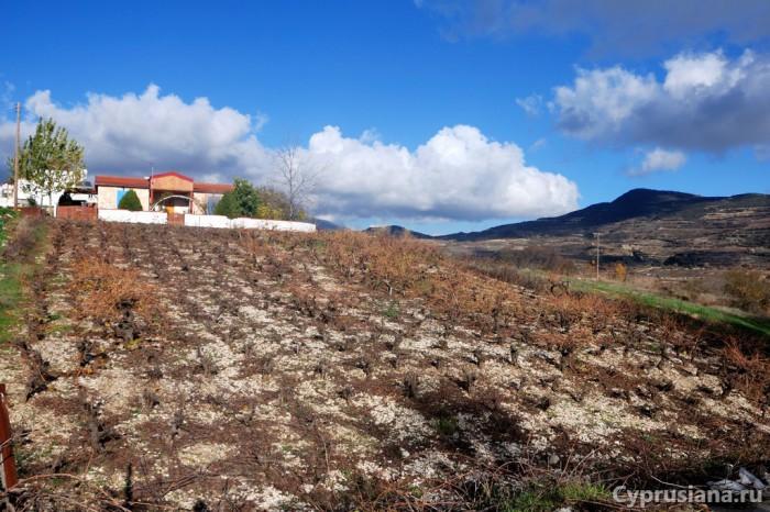 Виноградный огород