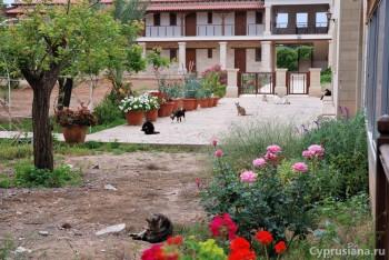 Кошачий монастырь