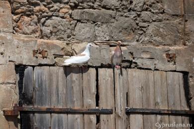 Вода и голуби