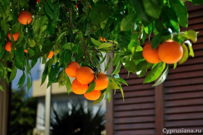Декабрьский Кипр