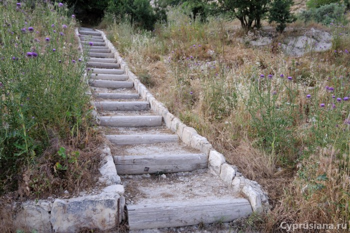 Лестница на тропе