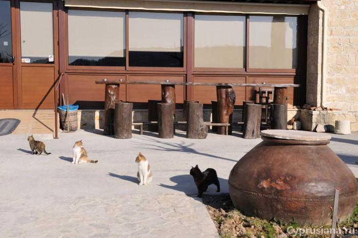Кошки у входа