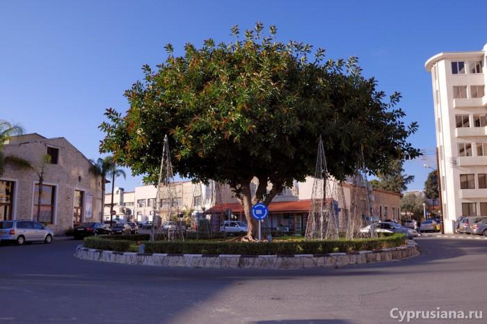 Фикус в районе Старого порта
