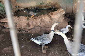 Животные в Ахне