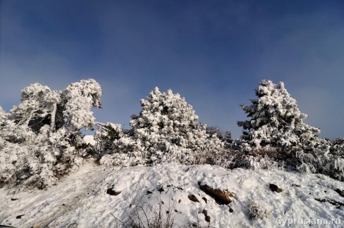 Тропа зимой