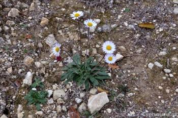 Кусты и цветы
